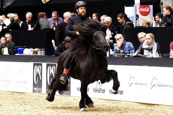 MCK4266 stallion show 110217