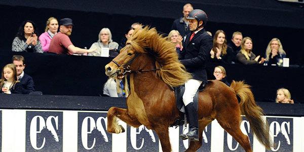 mck0277-glodafeykir-in-stallion-show-270216