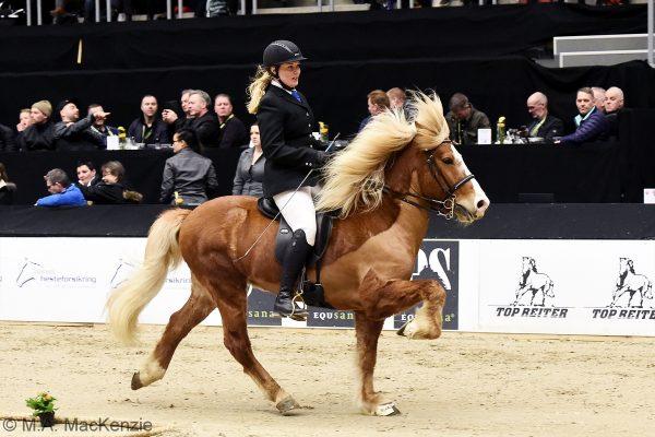 MCK0286 Sjarmi 240218 stallion show