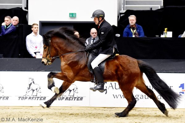 MCK0887 Thór-Steinn and Jóhann 240218 stallion show