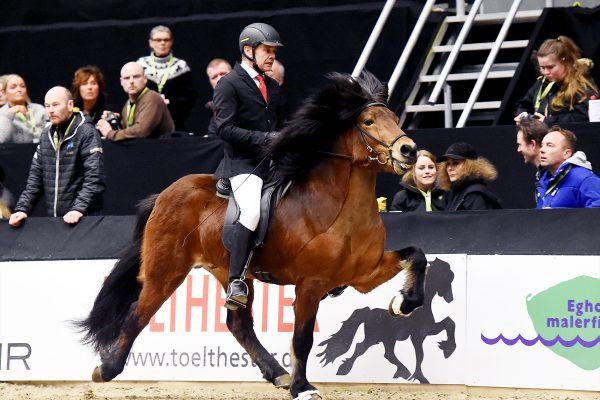 MCK1078 Thór-Steinn and Jóhann 240218 stallion show