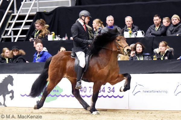 MCK1082 Thór-Steinn and Jóhann 240218 stallion show