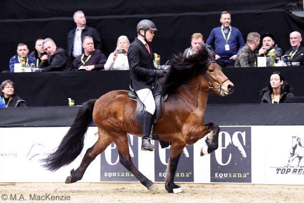 MCK1088 Thór-Steinn and Jóhann 240218 stallion show