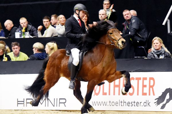 MCK1122 Thór-Steinn and Jóhann 240218 stallion show