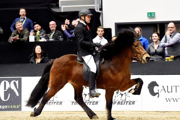 MCK1258 Thór-Steinn and Jóhann Stallion show WT240218