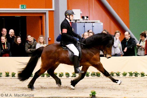 MCK1612 Thór-Steinn and Jóhann 4-gait stallion show 240218