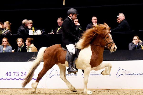 MCK3014 Bogi and Tryggvi 5-gait stallion show 240218
