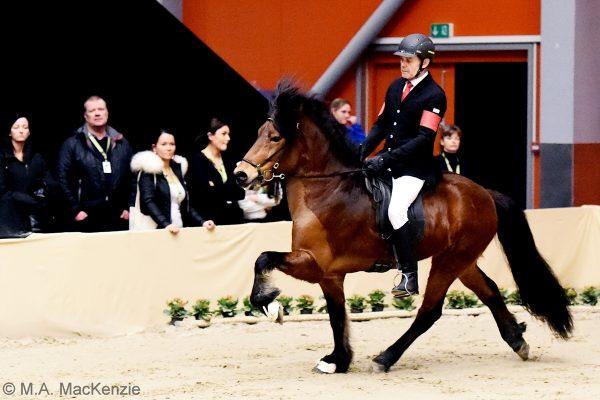 MCK8017 Thór-Steinn and Jóhann 4-gait stallion show 240218