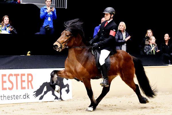MCK8025 Thór-Steinn and Jóhann 4-gait stallion show WT240218