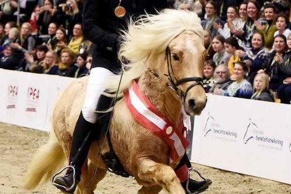 MCK8697 Skinfaxi winner 5-gait stallion show 240218