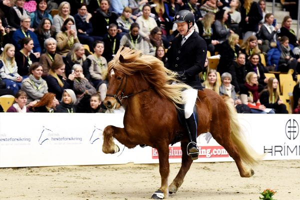 MCK9958 Snorri and Soren 4-gait stallion show 240218