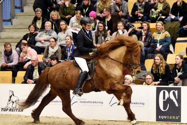 MCK9982 Jarl and Steffi 4-gait stallion show 240218