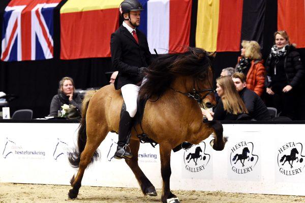 MCK0383 Muni 230219 Stallion show