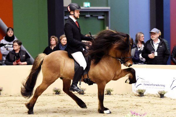 MCK0412 Muni 230219 Stallion show