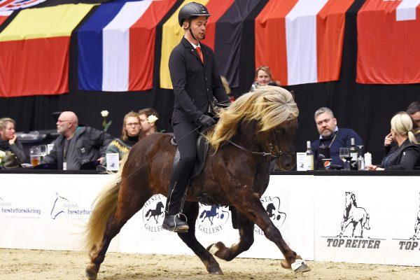 MCK0476 Eyvar 230219 Stallion show