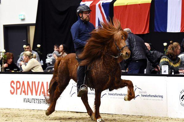 MCK0759 Kraftur 230219 Stallion show