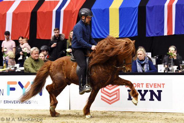 MCK0951 Kraftur 230219 Stallion show