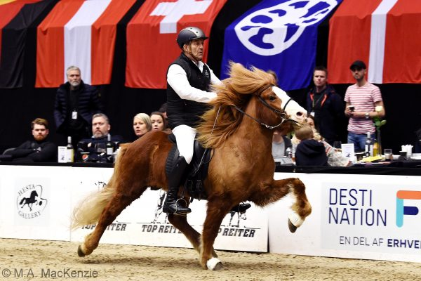 MCK1074 Frami 230219 Stallion show