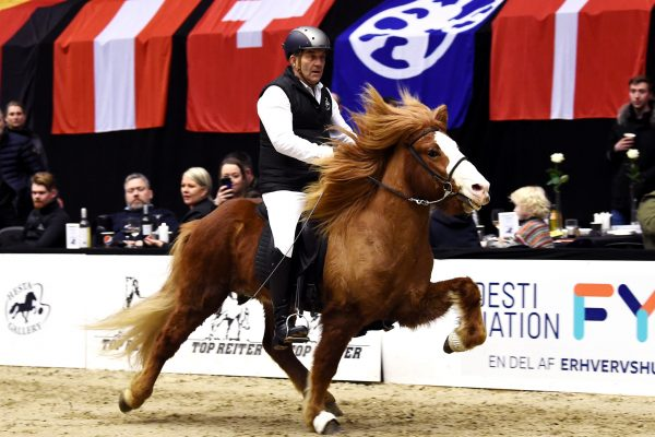 MCK1163 Frami 230219 Stallion show