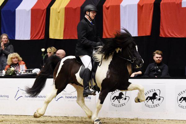 MCK1335 Aron 230219 Stallion show