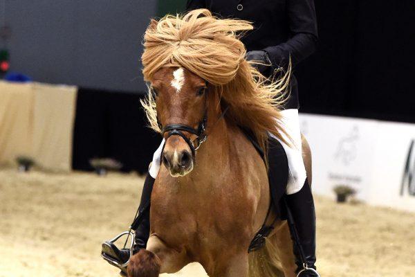 MCK1374 Völur 230219 Stallion show
