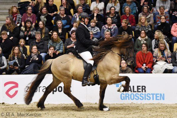 MCK1435 Byr 230219 Stallion show