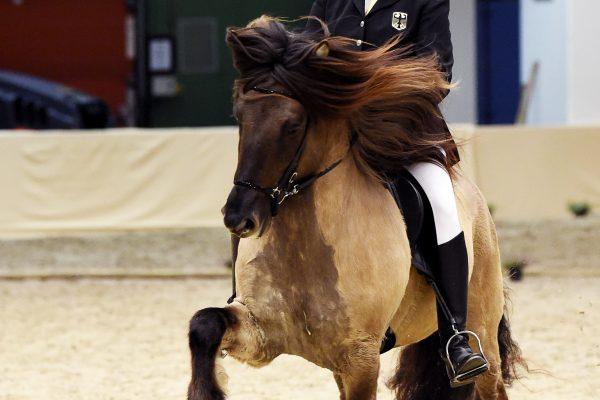 MCK1512 Byr 230219 Stallion show.nef