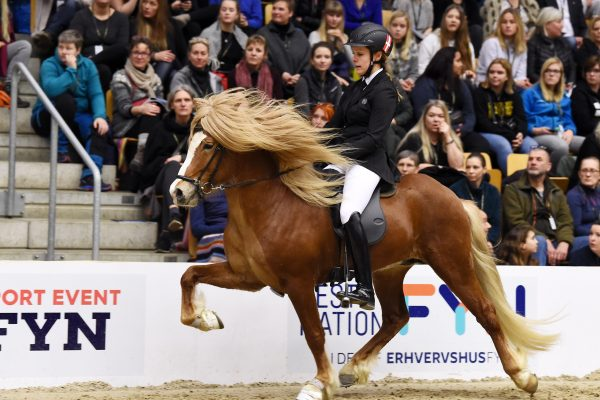 MCK1512 Vitus 230219 Stallion show