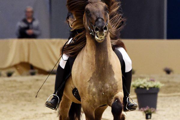 MCK1533 Byr 230219 Stallion show