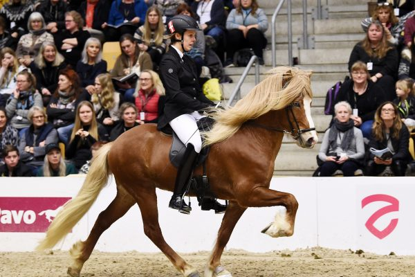 MCK1559 Vitus 230219 Stallion show
