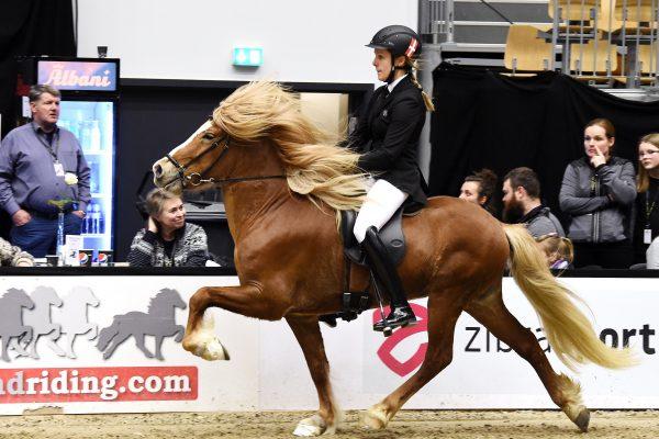 MCK1598 Vitus 230219 Stallion show