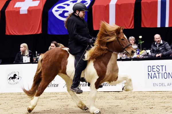 MCK2165 Breeding show Pegasus 230219