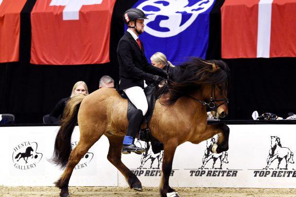 MCK5932 Muni 230219 Stallion show