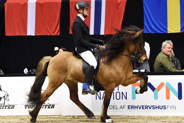 MCK5938 Muni 230219 Stallion show