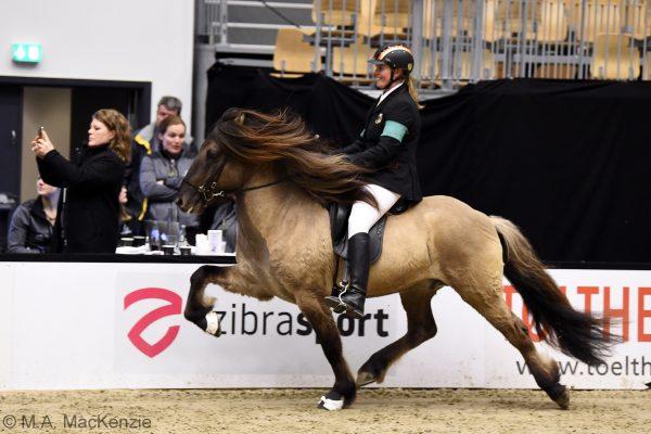 MCK6134 Byr 230219 Stallion show