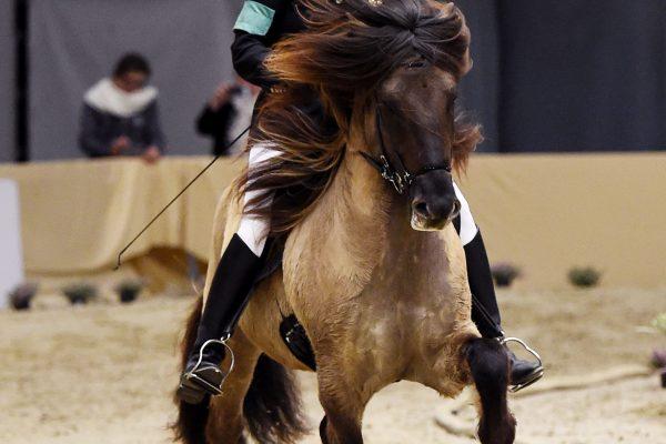 MCK6154 Byr 230219 Stallion show