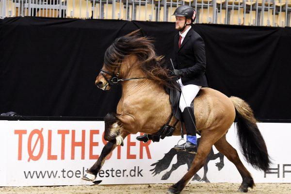 MCK6363 Muni 230219 Stallion show wwinner