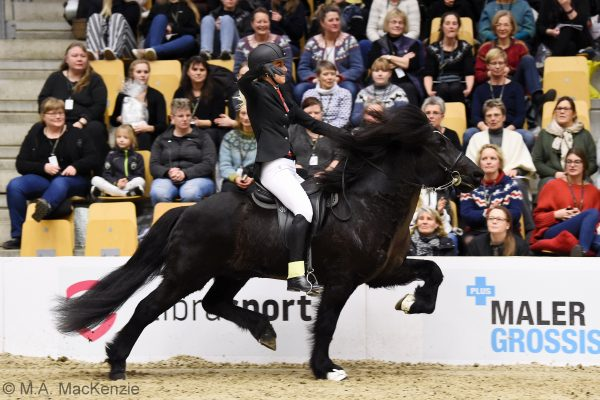 MCK6593 Tinni 230219 Stallion show final