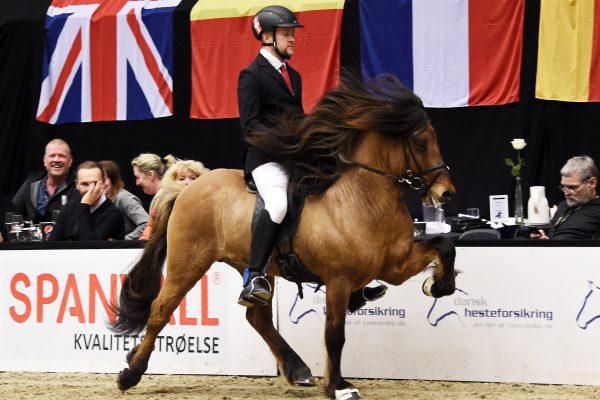 aalMCK6565 Muni 230219 Stallion show final