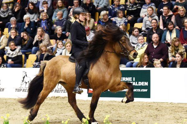 MCK0001 Vökull stallion show 220220