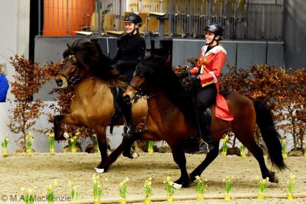 MCK0117 Vökull and Morgan - 4 gaited stallions show 220220