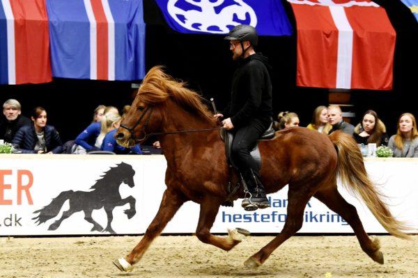 MCK0238 Trúr and Elias 220220 5-gaits stallion show