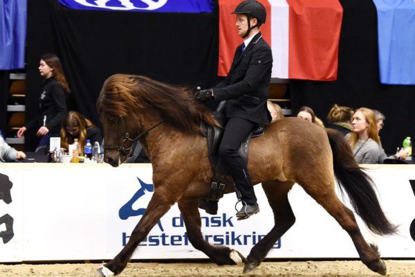 MCK0504 Álfathor stallion show 220220