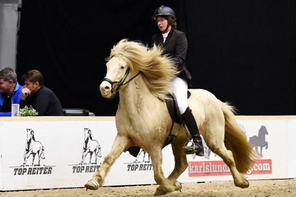MCK0834 Limbó 220220 stallion show
