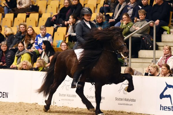 MCK0921 Divar stallion show 220220