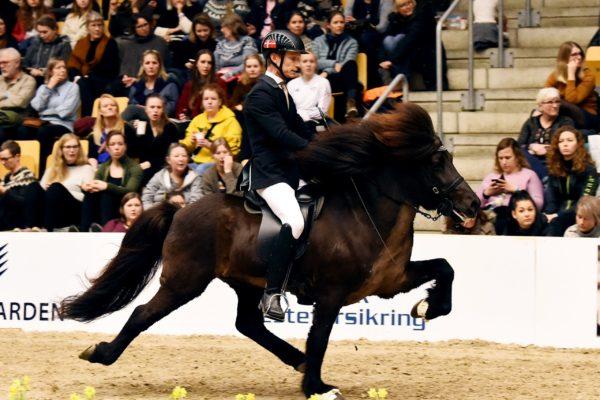 MCK0943 Eldjarn stallion show 22-22-