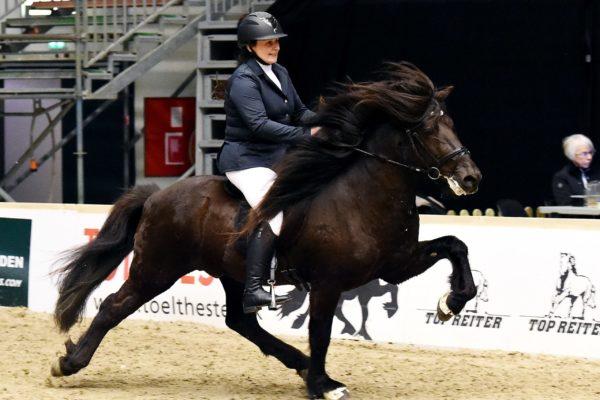 MCK1011 Divar stallion show 2202220