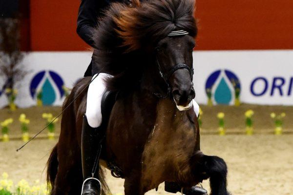 MCK1072 Eldjarn stallion show 220220