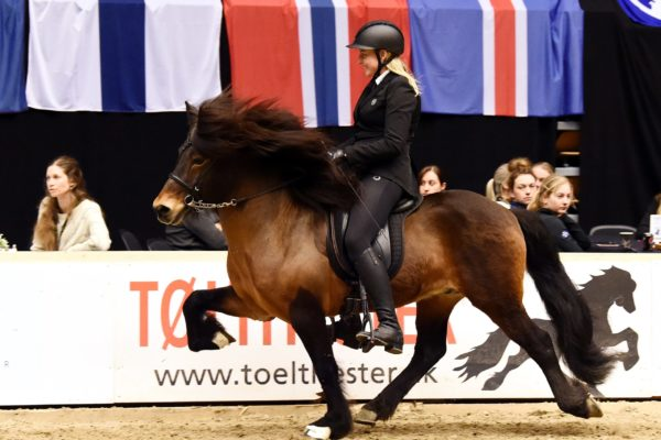 MCK1161 Sjarmör stallion show 220220