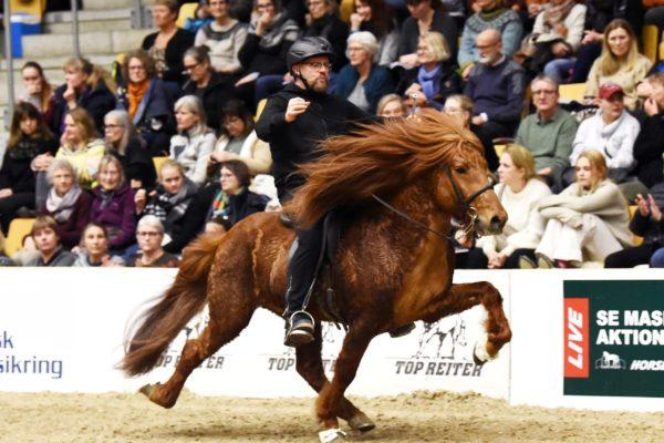 MCK1181 Kraftur stallion show 220220
